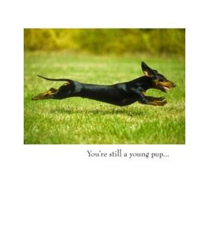 BD/Dog Running
