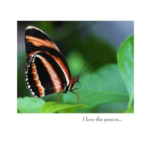 BD/Black And Orange Butterfly