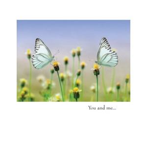 AN/Blue Butterflies
