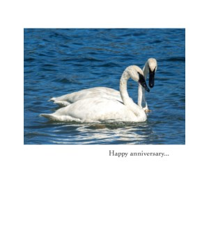 AN/Two Swans