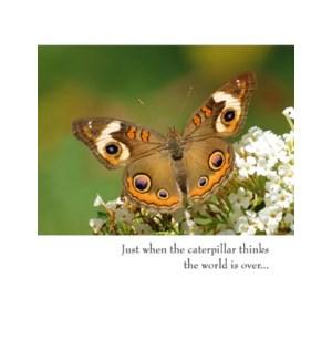 EN/Brown And Orange Butterfly