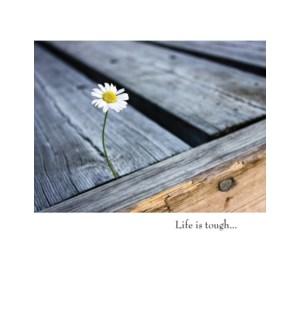 EN/Yellow & White Flower