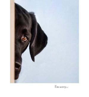 AP/Half Sad Dog