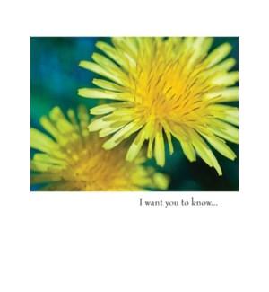 AP/Yellow Flower
