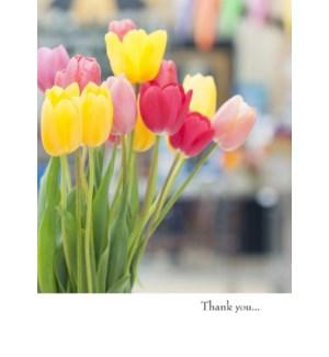 TY/Tulips