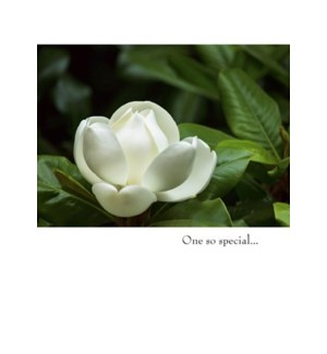SY/White Flower