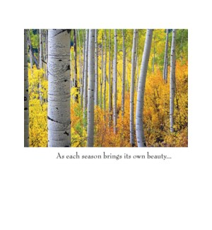 SY/Birch trees