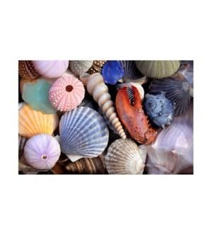 BL/Sea Shells