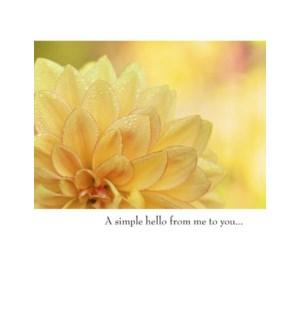 FR/Yellow Flower