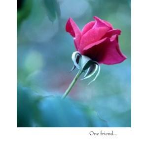 FR/Red Rose