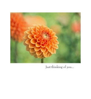 TH/Just thinking of you…