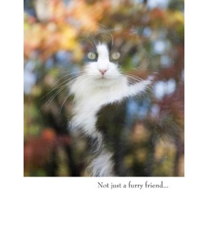 PSY/Not just a furry friend…
