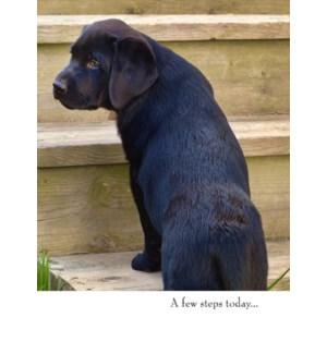 GW/Black Puppy