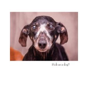 GW/Sick As A Dog