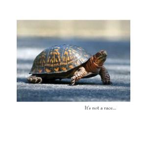 GW/Turtle