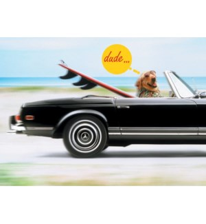 BD/Dog Surfer