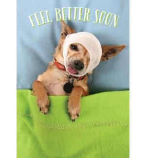 GW/Dog In Bandage