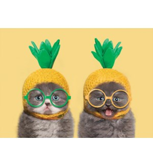 BD/Pineapple Cats