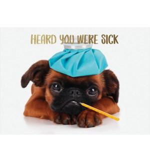 GW/Sick Pug