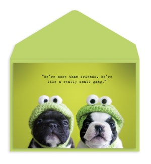 FR/Frenchie Frogs