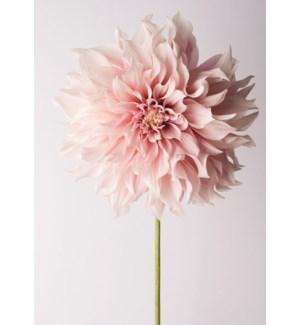 BL/Pink Flower