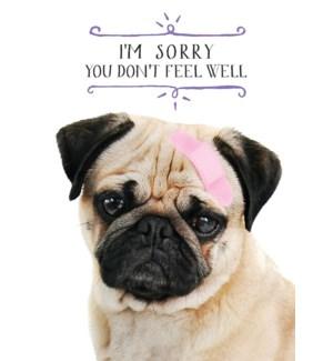 GW/Pug Dog With Bandage