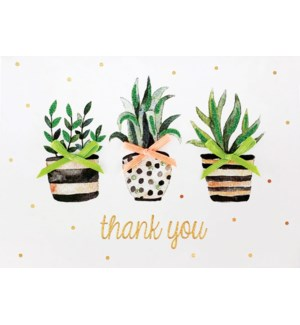 TY/Plants Thank You