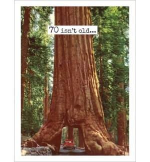 ABD/70 Tree