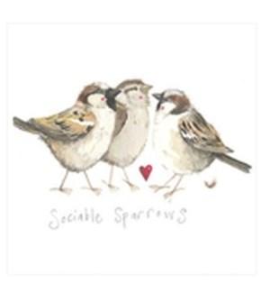 EDB/Sociable Sparrows