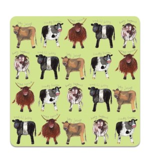 COASTER/Cows