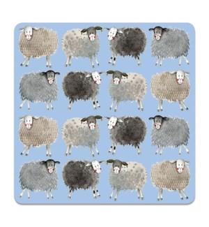 COASTER/Sheep