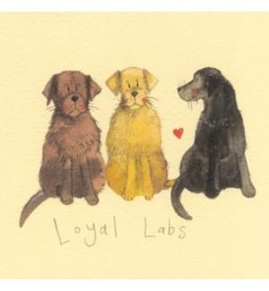 COASTER/Loyal Labs