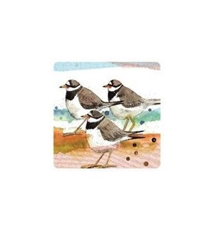 COASTER/Ringed Plovers