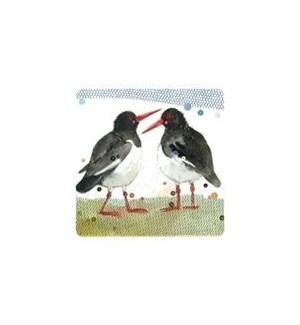 COASTER/Oystercatchers