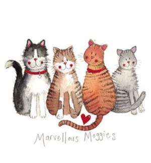 EDB/Marvellous Moggies