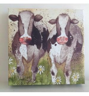 CANVAS/Curious Cows SM