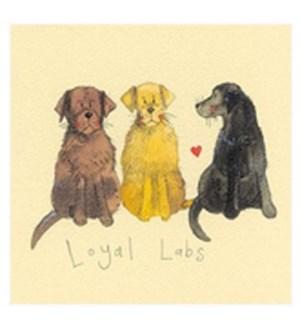 EDB/Loyal Labs