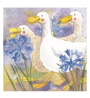 MAG/Three Ducks