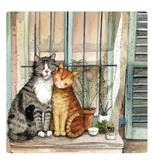 MAG/Provence Cats