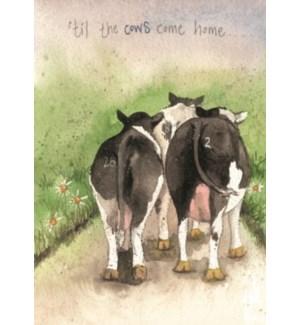 EDB/Cows Come Home
