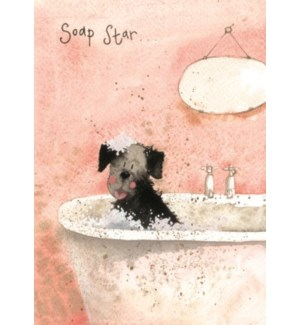 EDB/Soap Star