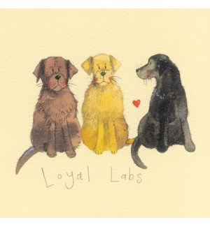 KY/LOYAL LABS