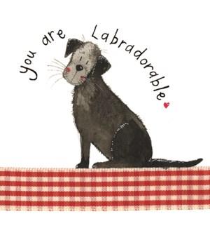 EDB/Labradorable