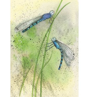 BL/Blue Dragonflies