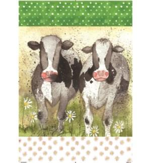 TEATOWEL/Curious Cows