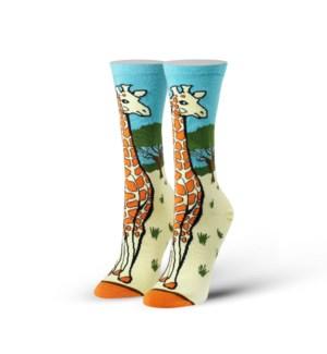 SOCKS/Giraffe