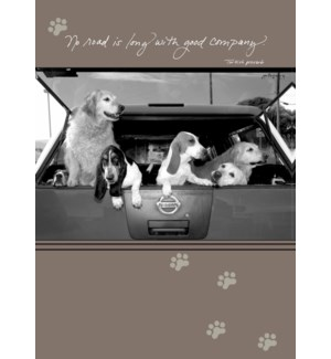 BD/Six dogs hanging out of car