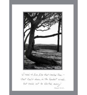 EN/Crooked tree