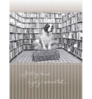 BD/St. Bernard in Bookstore