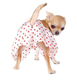 VAL/Chihuahua in Boxers